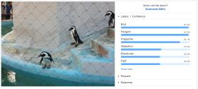 rekognition_penguin